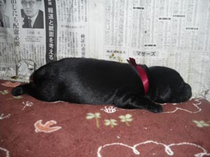 レッド(赤)ちゃん_b0084194_13541997.jpg