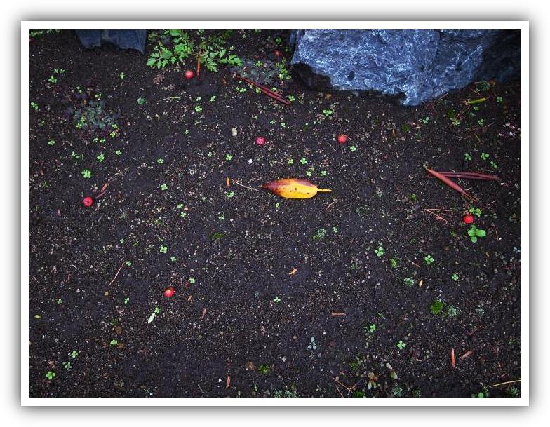 ビルの花壇の秋_f0033205_2230544.jpg