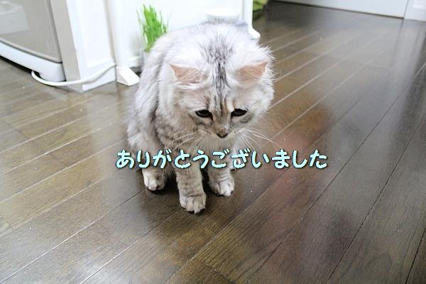 c0211109_447176.jpg