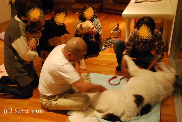 第3回「愛犬の為の整体教室」の模様 その2_c0099133_13353100.jpg