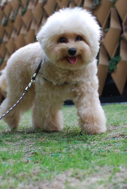 「犬連れOK!フラワーアレンジメント教室」vol.2のお知らせ_c0099133_2214342.jpg
