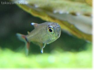 インレーロタラとか魚とか。。。_e0139056_22123174.jpg