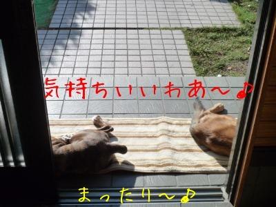 f0177261_103736.jpg