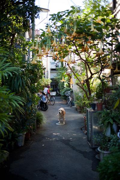 2010/11/03 文京区_b0171364_19315814.jpg