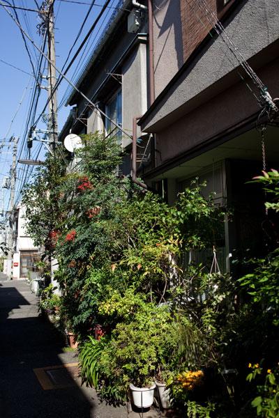 2010/11/03 文京区_b0171364_19322539.jpg