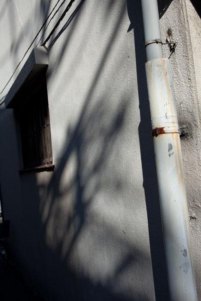 2010/11/03 文京区_b0171364_19324755.jpg