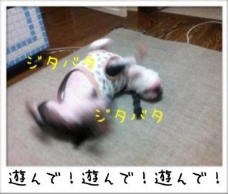 f0168374_1038494.jpg