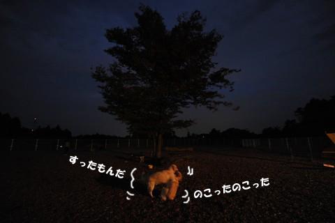 d0043478_22493132.jpg