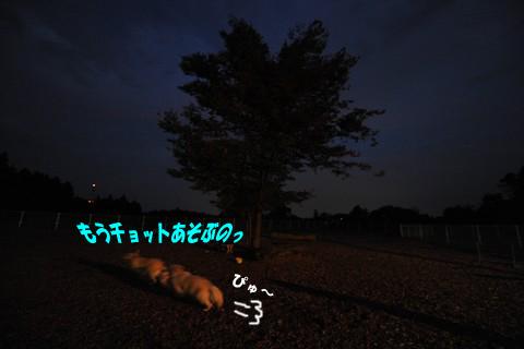 d0043478_2250997.jpg
