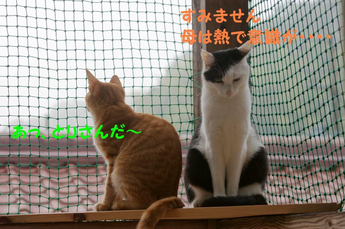 f0197682_0113889.jpg