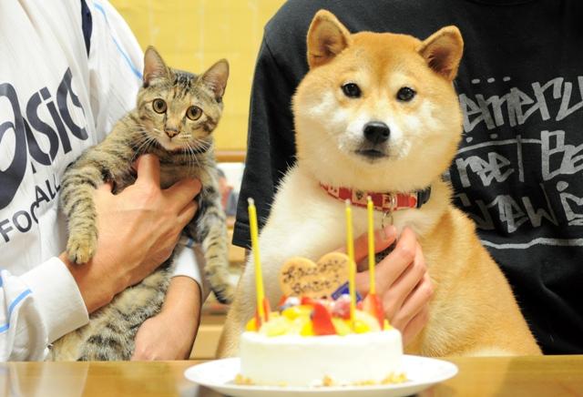 かぼちゃんの誕生日_a0126590_5484530.jpg