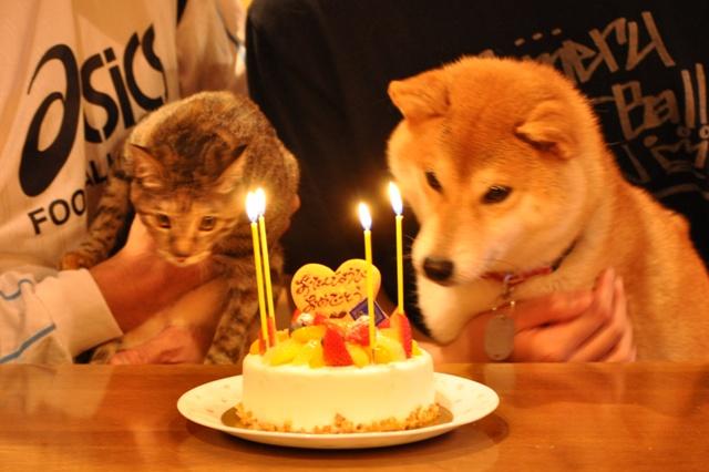 かぼちゃんの誕生日_a0126590_550229.jpg