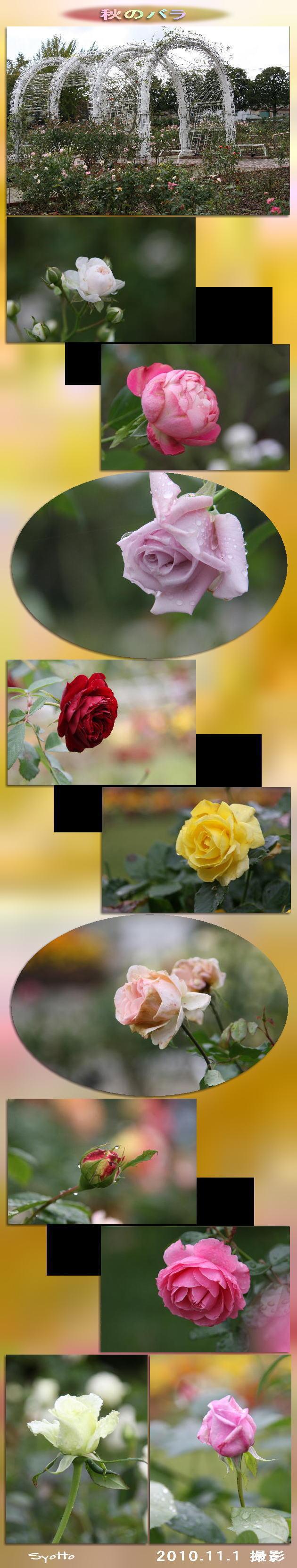 f0164592_8501327.jpg