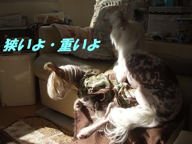 f0179203_17203813.jpg