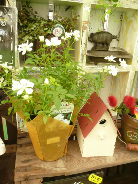 ガーデン工房 楓季庭です。_b0172807_20444643.jpg