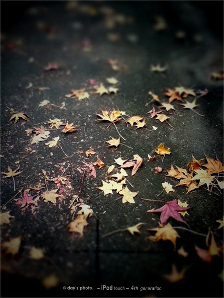 物欲の…秋。(^^;)_e0117517_18433556.jpg