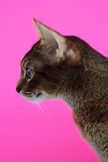 [猫的]色の力_e0090124_748671.jpg
