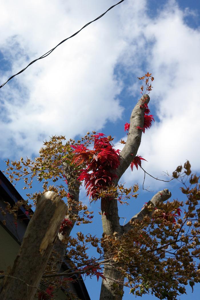 札幌の秋は自転車に乗って ~北大周辺の自転車散歩を振り返って~_c0223825_1412674.jpg