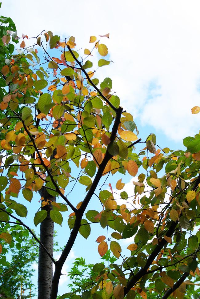 札幌の秋は自転車に乗って ~北大周辺の自転車散歩を振り返って~_c0223825_1523278.jpg