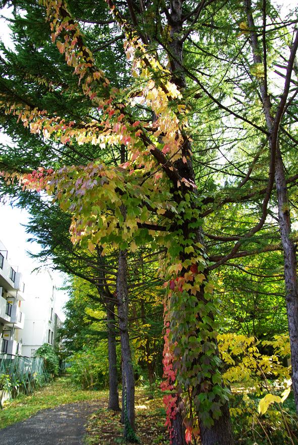 札幌の秋は自転車に乗って ~北大周辺の自転車散歩を振り返って~_c0223825_1545360.jpg