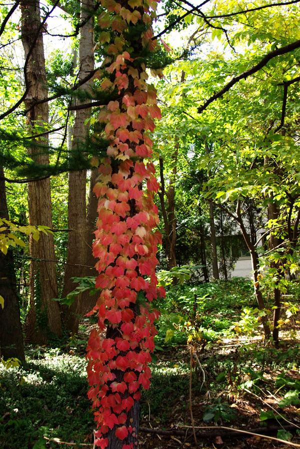 札幌の秋は自転車に乗って ~北大周辺の自転車散歩を振り返って~_c0223825_1593416.jpg