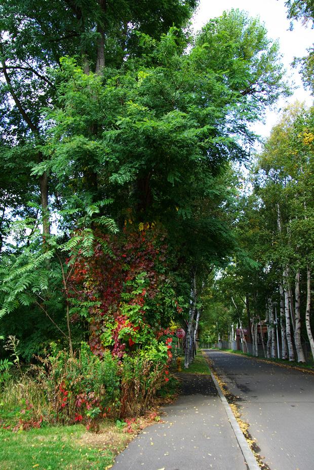 札幌の秋は自転車に乗って ~北大周辺の自転車散歩を振り返って~_c0223825_2105346.jpg
