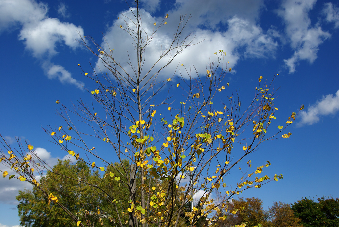 札幌の秋は自転車に乗って ~北大周辺の自転車散歩を振り返って~_c0223825_2192617.jpg