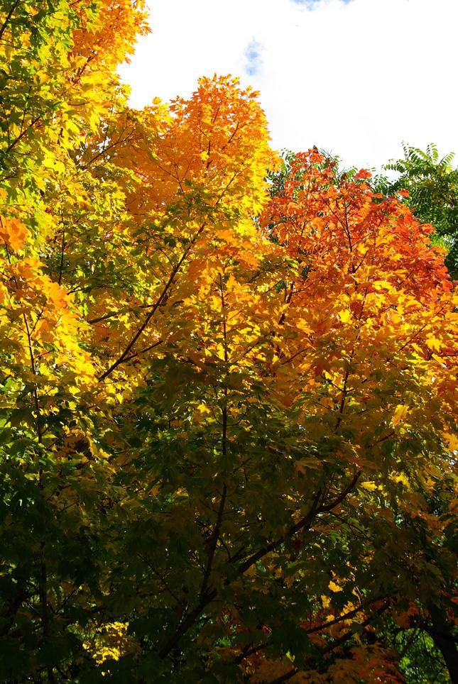 札幌の秋は自転車に乗って ~北大周辺の自転車散歩を振り返って~_c0223825_225911.jpg