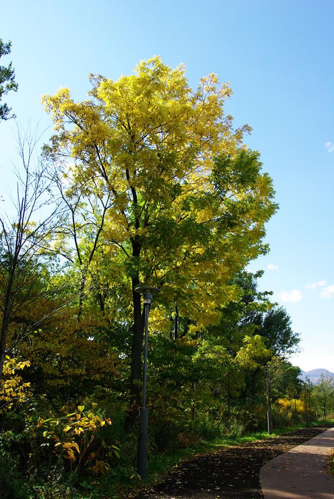 札幌の秋は自転車に乗って ~北大周辺の自転車散歩を振り返って~_c0223825_2263293.jpg