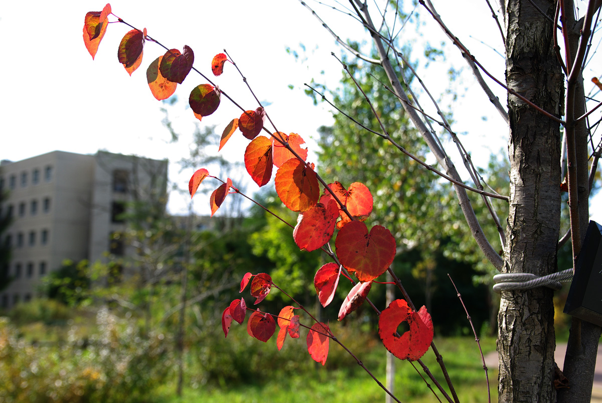 札幌の秋は自転車に乗って ~北大周辺の自転車散歩を振り返って~_c0223825_228451.jpg