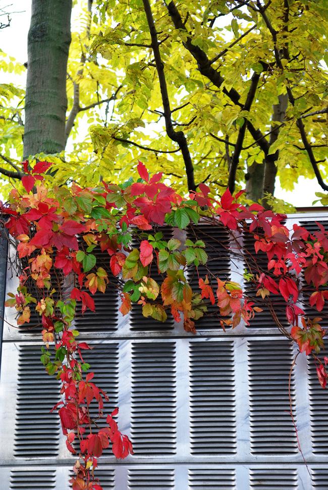 札幌の秋は自転車に乗って ~北大周辺の自転車散歩を振り返って~_c0223825_2323238.jpg