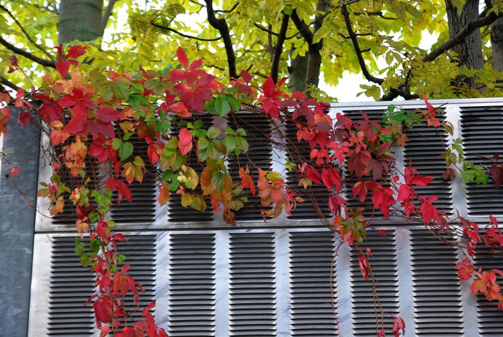 札幌の秋は自転車に乗って ~北大周辺の自転車散歩を振り返って~_c0223825_2335461.jpg