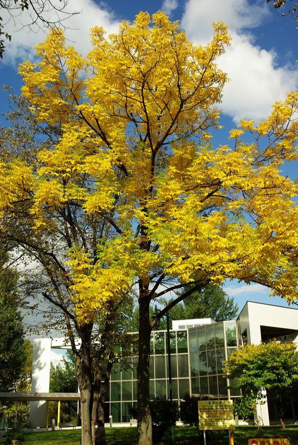 札幌の秋は自転車に乗って ~北大周辺の自転車散歩を振り返って~_c0223825_245446.jpg