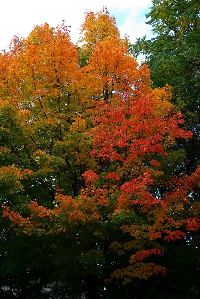 札幌の秋は自転車に乗って ~北大周辺の自転車散歩を振り返って~_c0223825_2491873.jpg