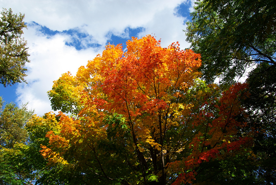札幌の秋は自転車に乗って ~北大周辺の自転車散歩を振り返って~_c0223825_252821.jpg