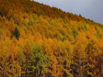 白峰とカラマツの黄葉_f0182173_1321351.jpg