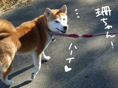 お天気散歩の珊ちゃん_b0057675_22123758.jpg