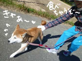 お天気散歩の珊ちゃん_b0057675_22123865.jpg