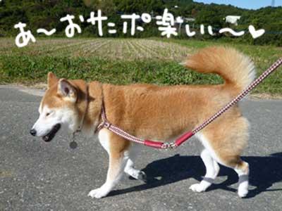 お天気散歩の珊ちゃん_b0057675_22123899.jpg