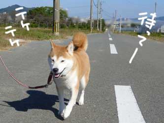 お天気散歩の珊ちゃん_b0057675_22124158.jpg