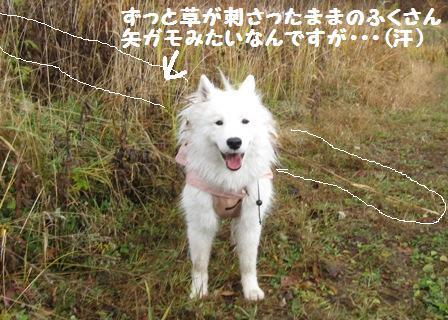 f0212597_843142.jpg