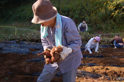 ☆サツマイモ大収穫祭☆_a0154110_14343778.jpg