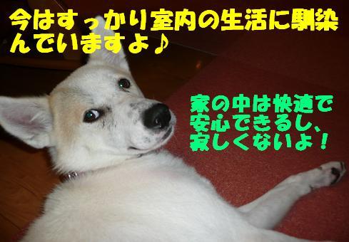 f0121712_55435100.jpg