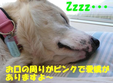 f0121712_661242.jpg