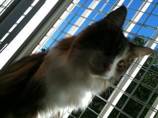 猫、洗っちゃいました_f0181924_222583.jpg