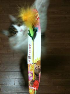 猫、洗っちゃいました_f0181924_2242983.jpg