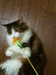 猫、洗っちゃいました_f0181924_2281760.jpg