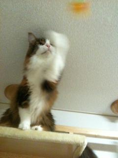 猫、洗っちゃいました_f0181924_2334351.jpg
