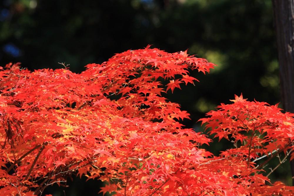 小倉稲荷神社例祭_c0111229_1743468.jpg