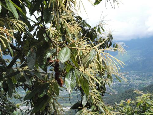 ネパール続き_c0177135_21131579.jpg